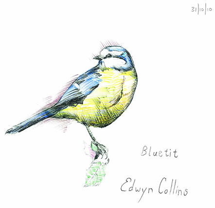 Edwyn Collins Bluetit